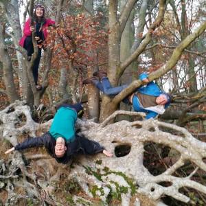 climbing trees, woodland trust,