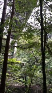 Bungee Jump highland fling