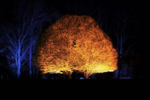 Norie-Miller Walk Light Nights