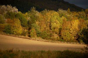 Autumn Bridge of Earn, Perthshire